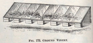 ground-vinery-jpegc_259c3e.jpg