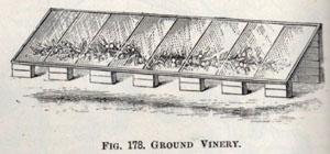 ground-vinery-jpegc_259c3e.jpg