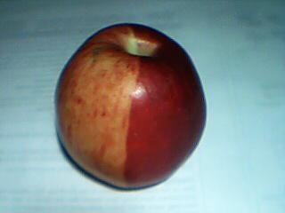 apple-4-001.jpg