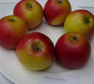 Meridian apple - a magnificent first
