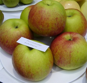 Peasgood Nonsuch - best plate of apples in the Show