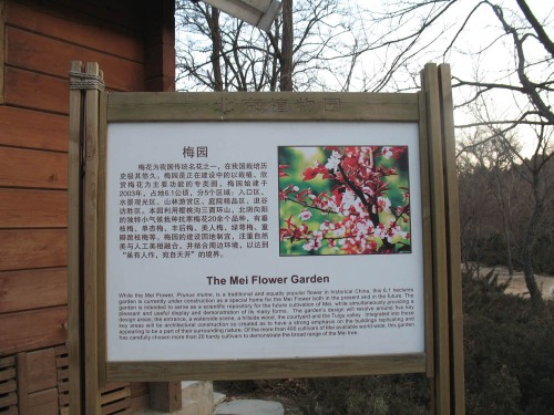 Beijing Botanic Garden: the collection of 'Prunus mume'