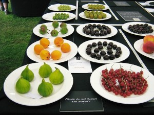 Collection of six dishes of fruit awarded Hogg Medal