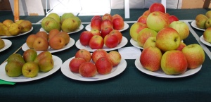 First prize in award for nine plates of apples and pears won by Adrian Baggaley