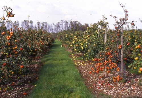 National Fruit Collection - Apple Collection