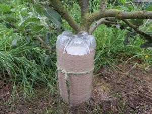 Earwig 'hotel' to encourage earwig predators