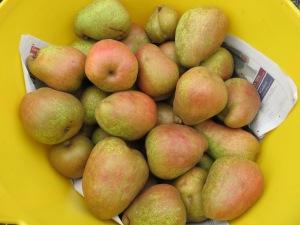 Margueriete Marillat pears
