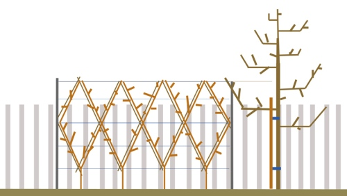 'Belgian Fence'