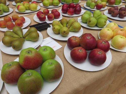 Class 11: Best Collection of Fruit at the RHS Autumn Show 2015 won by Adrian Baggaley